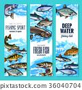 fish, seafood, sketch 36040704