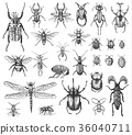 big set of insects bugs beetles and bees many 36040711