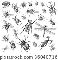 big set of insects bugs beetles and bees many 36040716
