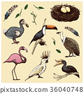 hand drawn vector realistic bird, sketch graphic 36040748