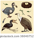 extinct species birds, griffon vultures 36040752