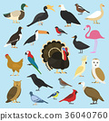 set of domestic birds and tropical animals 36040760