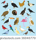 set of domestic birds and tropical animals 36040770