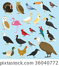 set of domestic birds and tropical animals 36040772