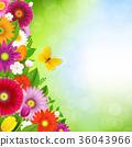 花 花朵 花卉 36043966