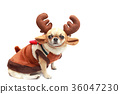 Dog with reindeer dress. 36047230