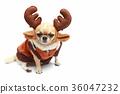 Dog with reindeer dress. 36047232