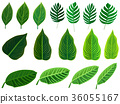 Tropical leaves set. Vector clip art illustration. 36055167