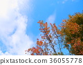 푸른, 하늘, 가을 36055778