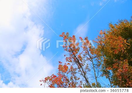 푸른 하늘, 파란 하늘, 가을 36055778