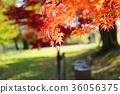 가을의 공원 단풍 나무 단풍 36056375