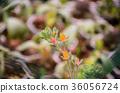 다육 식물, 다육 36056724