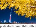 ฤดูใบไม้ร่วง,โตเกียวสกายทรี,ประภาคาร 36057063