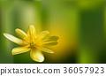 Romantic floral background. Flower. Rose 36057923