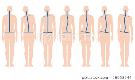 spine, posing, posture 36058544