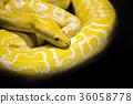 python snake black background 36058778