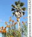 레오노찌스의 새빨간 꽃과 야자수 36062282