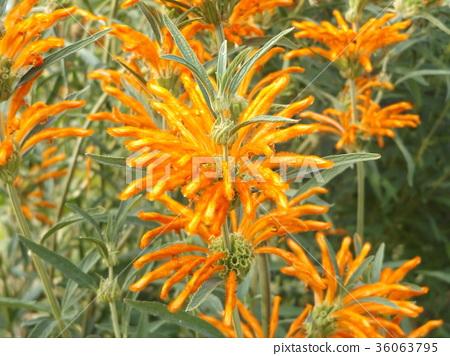 花朵 花卉 花 36063795