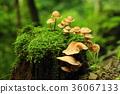 비가 갠 뒤의 숲 36067133