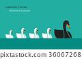 Vector of swan family, Leadership 36067268