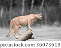 Black and white photography with color puma 36073619