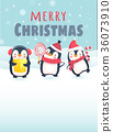 Penguins with Christmas gifts 36073910