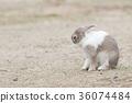 토끼, 동물, 오쿠노 섬 36074484