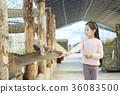 동물원, 먹여주기, 먹이 36083500