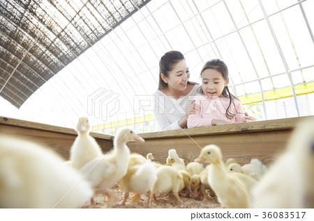 家庭 家人 家族 36083517