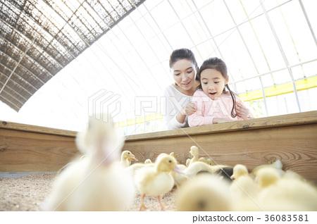 家庭 家人 家族 36083581
