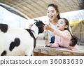 母親,女兒,經驗,山羊 36083639