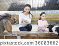 母親,女兒,經驗,山羊 36083662