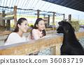 母親,女兒,經驗,山羊 36083719
