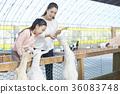 母親,女兒,經驗,山羊 36083748