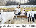 母親,女兒,經驗,山羊 36083806