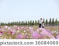 花 庭園 花卉園 36084069