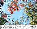 푸른, 하늘, 식물 36092944