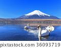 후지산, 야마나카코, 야마나카 호수 36093719