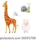 長頸鹿 蝸牛 鼠標 36093798
