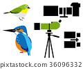 조류 관찰 36096332
