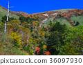 楓樹 紅楓 楓葉 36097930