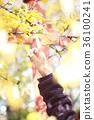 ต้นไม้,กิ่งไม้,ผู้หญิง 36100241
