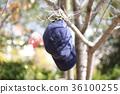 ต้นไม้,หมวก,หมวกแก๊ป 36100255