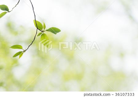 Fresh green sky 36107333