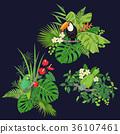 vector toucan bird 36107461
