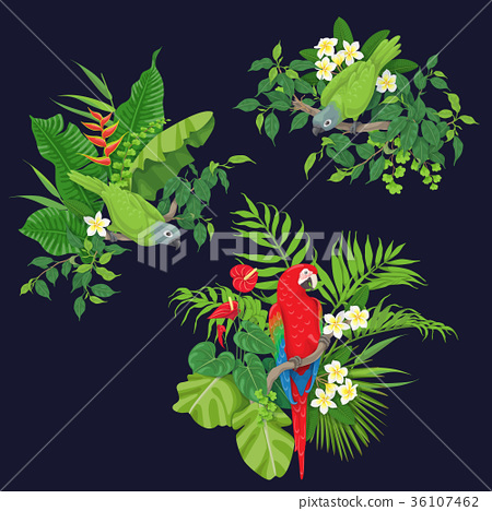Green Parrots and Red Macaw on Tree Branch 36107462