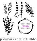 Set of lavender. Hand drawn bunch of lavender 36108665