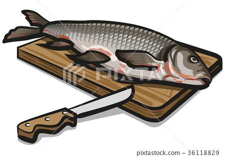 freshwater raw fish 36118829
