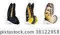 蝴蝶 蟲子 昆蟲 36122958
