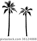 Palm Tree Silhouettes 36124888